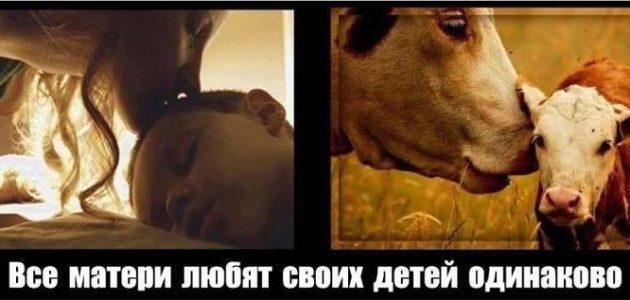 любовь еда животные